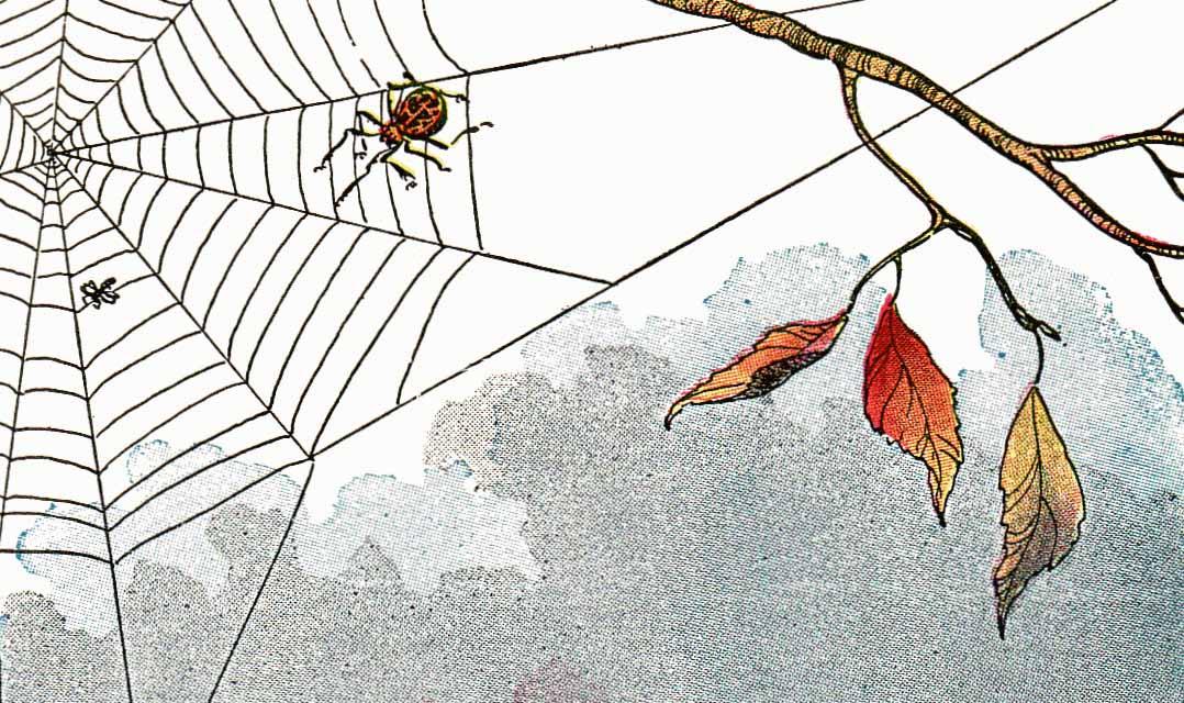 Örümcek ile Sinek Masalı 31