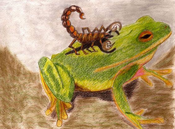 Akrep İle Kurbağa Hikayesi 1